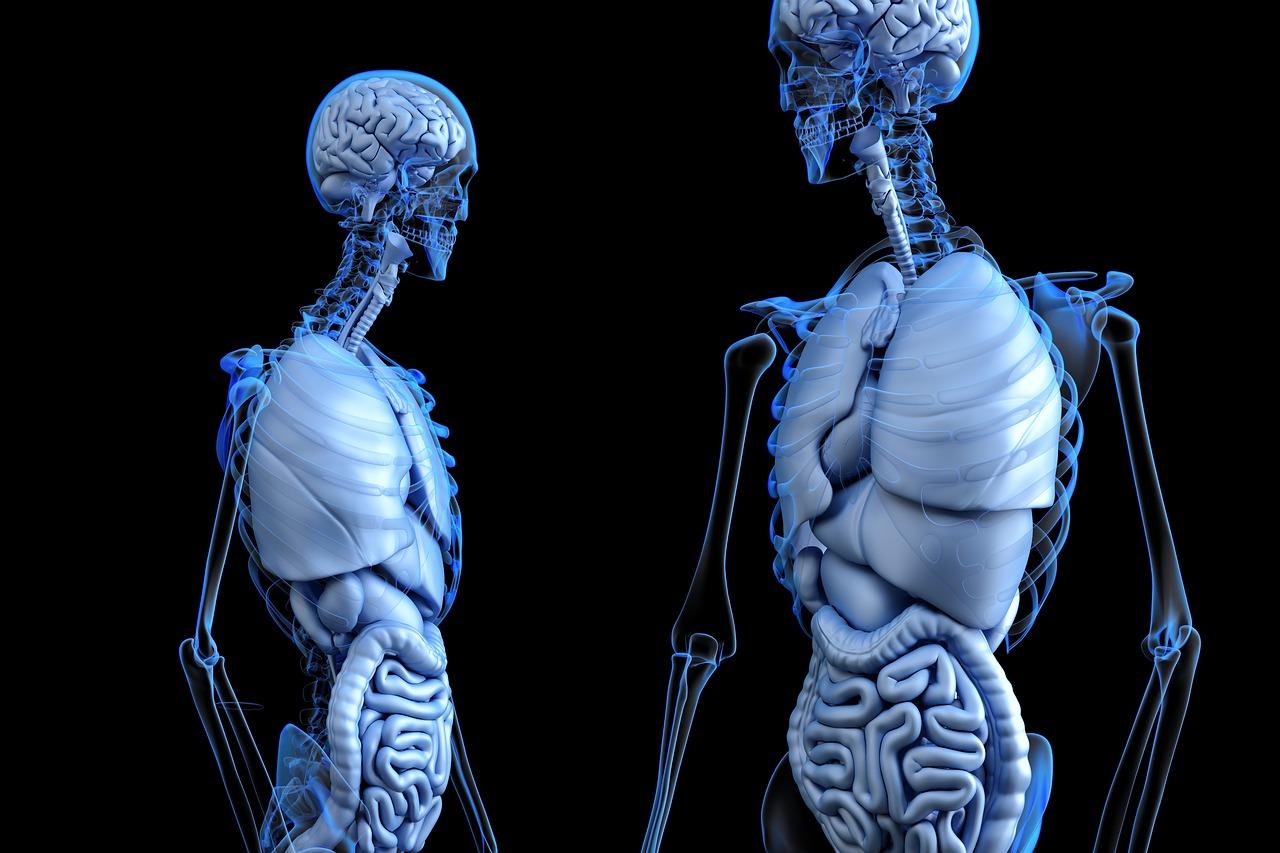 25 curiosidades del cuerpo humano.