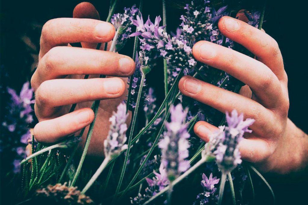 Aromaterapia con flores de lavanda