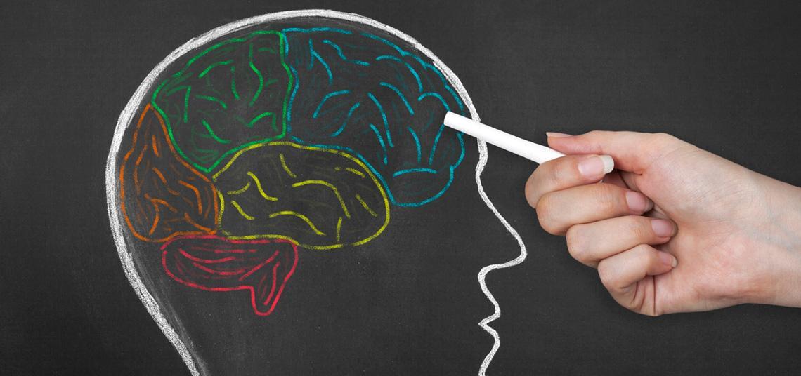 Cerebro dibujado con gises de colores